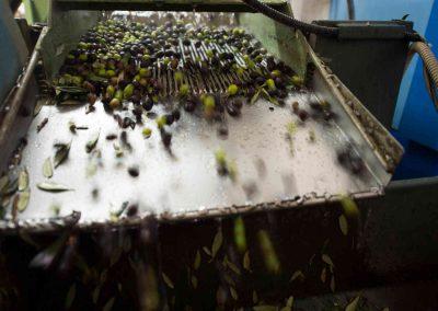 Lavaggio olive